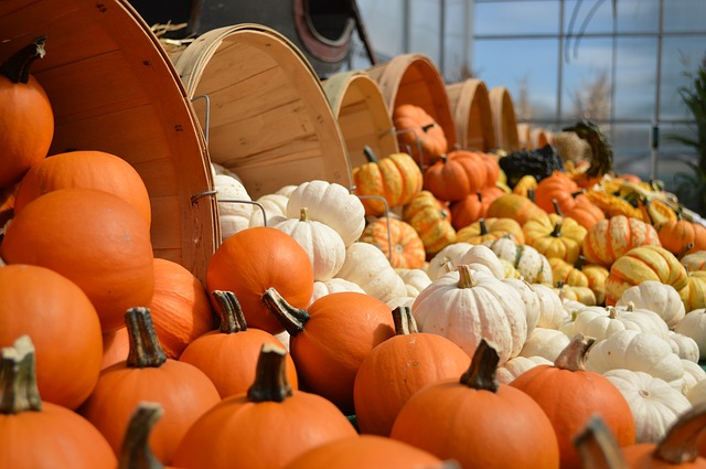gourds | Creekstone Village