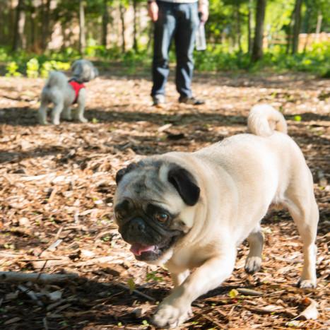 Dog in park | Creekstone Village